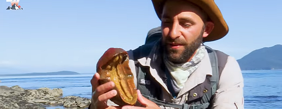 Coyote Peterson Finds 'Pac-Man Of The Sea'